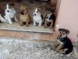 Darujem štaniatka , Zvieratá, Psy  | Tetaberta.sk - bazár, inzercia zadarmo