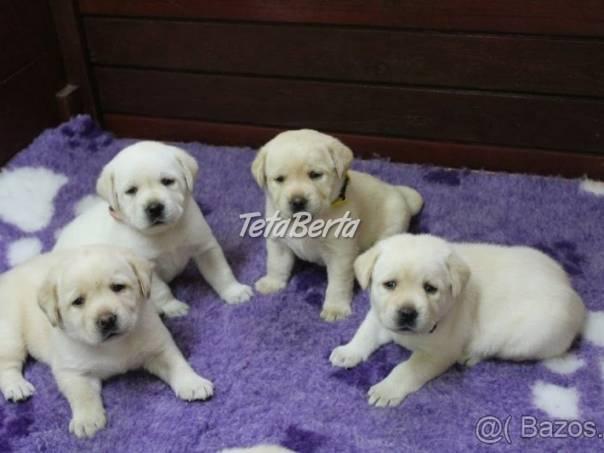 Labrador - šteniatka s preukazom pôvodu s PP, foto 1 Zvieratá, Psy | Tetaberta.sk - bazár, inzercia zadarmo