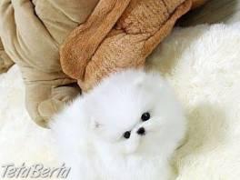 Krásne šteniatka pomeranian k dispozícii , Zvieratá, Psy  | Tetaberta.sk - bazár, inzercia zadarmo