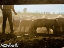 Práca na farme – Belgicko , Práca, Práca v zahraničí  | Tetaberta.sk - bazár, inzercia zadarmo