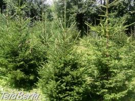 Vianočný stromček - smrek , Dom a záhrada, Zo záhradky  | Tetaberta.sk - bazár, inzercia zadarmo