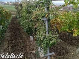 Vinohrad - Gbely , Reality, Ostatné  | Tetaberta.sk - bazár, inzercia zadarmo