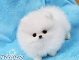 Rozkošný Pomeranian Štenatá ZADARMO