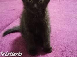 Mačiatka darujem , Zvieratá, Mačky  | Tetaberta.sk - bazár, inzercia zadarmo