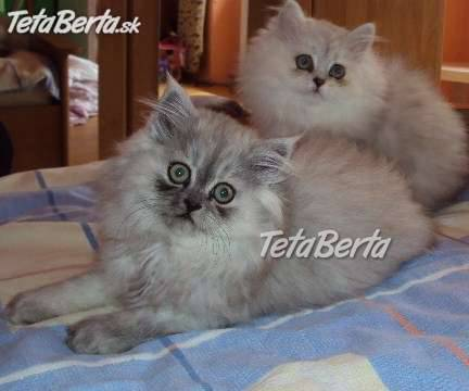 Perzske maciatka b70dccf326e