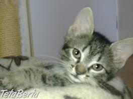 roztomilá bábika Felicia , Zvieratá, Mačky  | Tetaberta.sk - bazár, inzercia zadarmo
