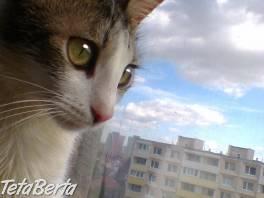 malá okatá Lucy , Zvieratá, Mačky  | Tetaberta.sk - bazár, inzercia zadarmo