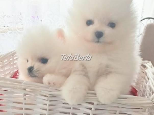 Pomeranian Spitz , foto 1 Zvieratá, Psy | Tetaberta.sk - bazár, inzercia zadarmo