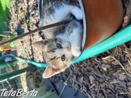 Darujem mačiatko , Zvieratá, Mačky  | Tetaberta.sk - bazár, inzercia zadarmo