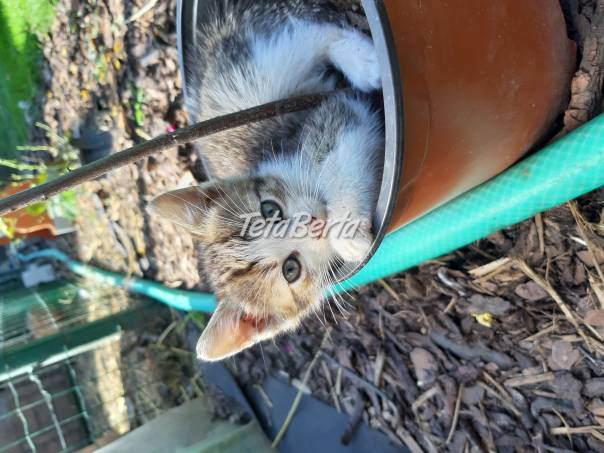 Darujem mačiatko, foto 1 Zvieratá, Mačky | Tetaberta.sk - bazár, inzercia zadarmo