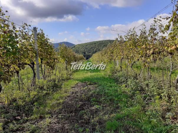 Predaj vína, foto 1 Hobby, voľný čas, Ostatné | Tetaberta.sk - bazár, inzercia zadarmo