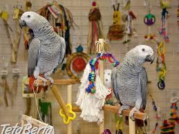Africké sivé papagáje Zako , Zvieratá, Ostatné  | Tetaberta.sk - bazár, inzercia zadarmo