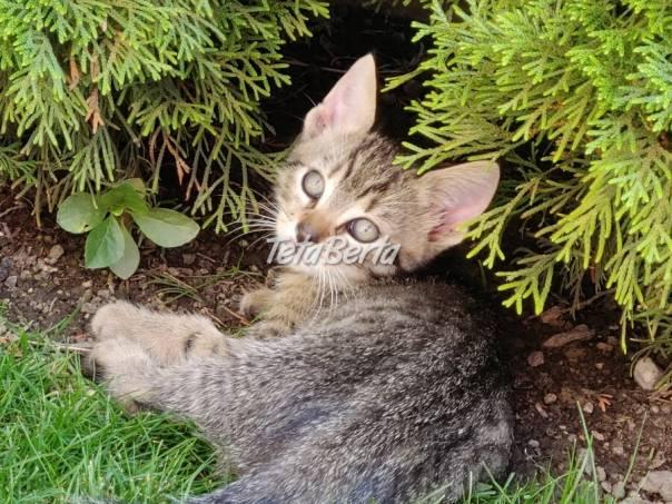 Darujem mačiatka, foto 1 Zvieratá, Mačky | Tetaberta.sk - bazár, inzercia zadarmo