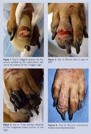 Vylieč si svojho psíka doma, foto 1 Zvieratá, Psy   Tetaberta.sk - bazár, inzercia zadarmo