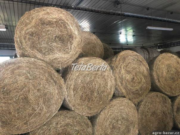 Lúčne seno, foto 1 Zvieratá, Hospodárske zvieratá | Tetaberta.sk - bazár, inzercia zadarmo