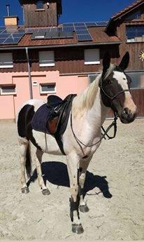 Kobylka na jazdenie a trénovanie, foto 1 Zvieratá, Hospodárske zvieratá | Tetaberta.sk - bazár, inzercia zadarmo
