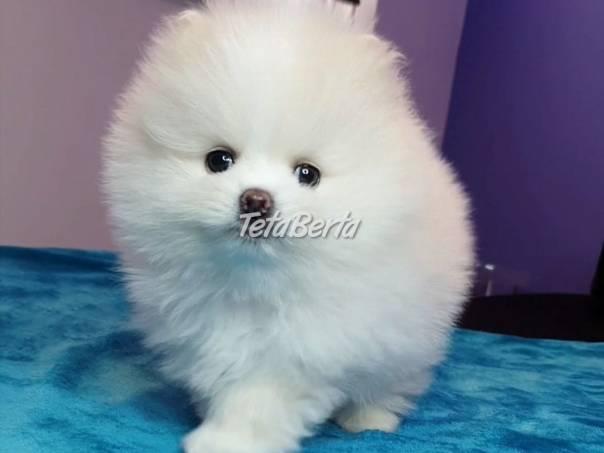 Pomeranian mini, foto 1 Zvieratá, Psy | Tetaberta.sk - bazár, inzercia zadarmo