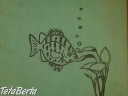 Akváriové ryby  , Hobby, voľný čas, Film, hudba a knihy  | Tetaberta.sk - bazár, inzercia zadarmo
