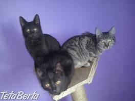 Darujeme kocúrikov , Zvieratá, Mačky  | Tetaberta.sk - bazár, inzercia zadarmo
