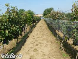 Vinica s chatkou v obci Pribeta. , Reality, Chaty, chalupy  | Tetaberta.sk - bazár, inzercia zadarmo