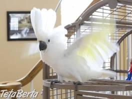 Dáždnik papagáj kakadu je pripravený pre váš domov , Zvieratá, Ostatné  | Tetaberta.sk - bazár, inzercia zadarmo