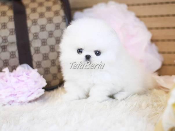 Pomeranian šteniatka, foto 1 Zvieratá, Psy | Tetaberta.sk - bazár, inzercia zadarmo