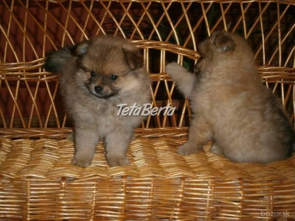 Nemecký špic - Pomeranian , foto 1 Zvieratá, Psy | Tetaberta.sk - bazár, inzercia zadarmo