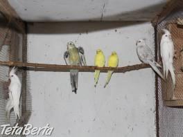 Predaj exotického vtáctva