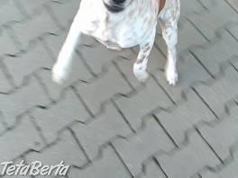Darujem štena, 5 mes , Zvieratá, Psy  | Tetaberta.sk - bazár, inzercia zadarmo