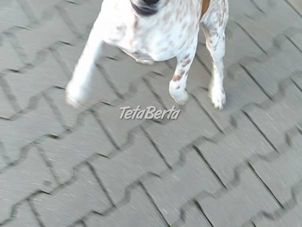 Darujem štena, 5 mes, foto 1 Zvieratá, Psy   Tetaberta.sk - bazár, inzercia zadarmo