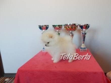 Pomeranian štěňata, foto 1 Zvieratá, Psy | Tetaberta.sk - bazár, inzercia zadarmo