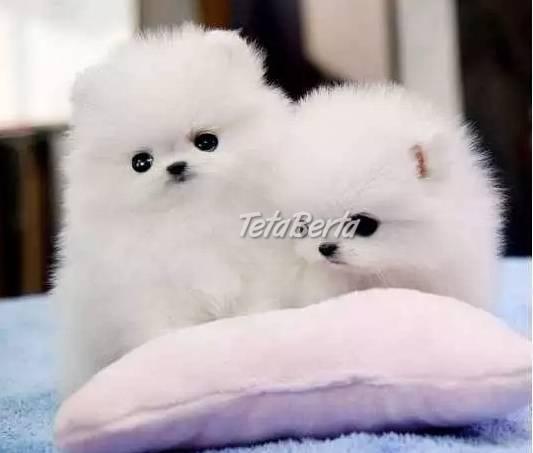 Úžasné šteniatka špicia, foto 1 Zvieratá, Psy | Tetaberta.sk - bazár, inzercia zadarmo