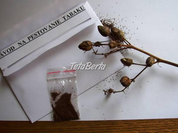 Tabak,semená, priesady, foto 1 Dom a záhrada, Zo záhradky | Tetaberta.sk - bazár, inzercia zadarmo