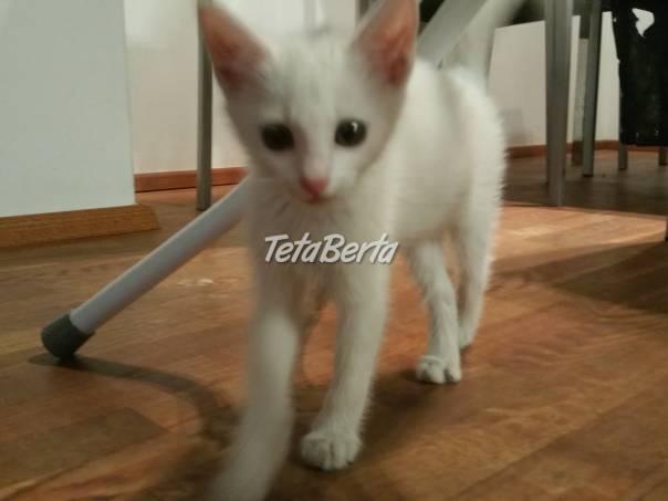 Darujem krasne biele maciatko, foto 1 Zvieratá, Mačky | Tetaberta.sk - bazár, inzercia zadarmo