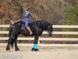 Elegantný frízsky kôň valach , Zvieratá, Ostatné  | Tetaberta.sk - bazár, inzercia zadarmo