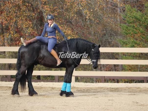 Elegantný frízsky kôň valach, foto 1 Zvieratá, Ostatné | Tetaberta.sk - bazár, inzercia zadarmo