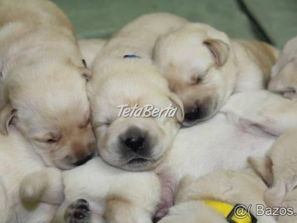 Labrador - šteniatka s preukazom pôvodu s PP, foto 1 Zvieratá, Psy   Tetaberta.sk - bazár, inzercia zadarmo