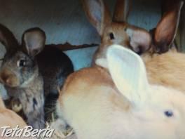 králiky , Zvieratá, Hospodárske zvieratá  | Tetaberta.sk - bazár, inzercia zadarmo