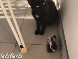 Darujem krásne mačiatko , Zvieratá, Mačky  | Tetaberta.sk - bazár, inzercia zadarmo
