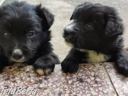 Hľadám domov pre šteniatka. , Zvieratá, Psy  | Tetaberta.sk - bazár, inzercia zadarmo