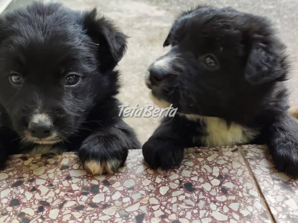 Hľadám domov pre šteniatka., foto 1 Zvieratá, Psy | Tetaberta.sk - bazár, inzercia zadarmo