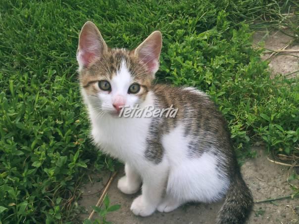 Darujem mačiatká ♡ ae0d325e429
