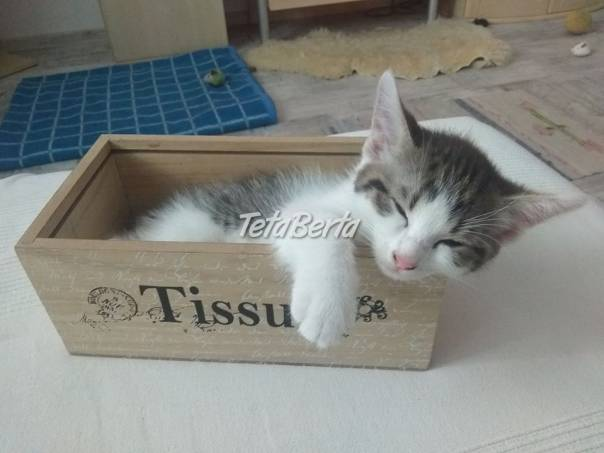 Darujem mačiatka, foto 1 Zvieratá, Mačky   Tetaberta.sk - bazár, inzercia zadarmo