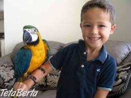 Nabídka zlatá a modrá papoušek , Zvieratá, Ostatné  | Tetaberta.sk - bazár, inzercia zadarmo