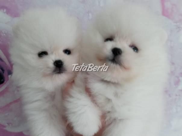 Pomeranian , foto 1 Zvieratá, Psy | Tetaberta.sk - bazár, inzercia zadarmo