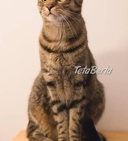Piškót&Puding - dvaja nádherní kocúri s orientálnymi črtami, foto 1 Zvieratá, Mačky | Tetaberta.sk - bazár, inzercia zadarmo