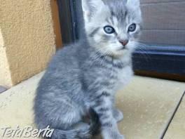 Darujem mačiatka , Zvieratá, Mačky  | Tetaberta.sk - bazár, inzercia zadarmo
