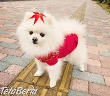 nádherné šteniatka šteniatka a samice pomeranian na predaj , Zvieratá, Psy  | Tetaberta.sk - bazár, inzercia zadarmo