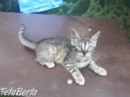 Darujem mačičku , Zvieratá, Mačky  | Tetaberta.sk - bazár, inzercia zadarmo