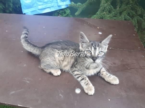 Darujem mačičku, foto 1 Zvieratá, Mačky | Tetaberta.sk - bazár, inzercia zadarmo